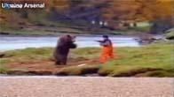 Trận đấu có một không hai của gấu và người