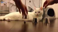 Chú mèo thông minh nhất thế giới