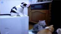 Những chú mèo cực kỳ ngộ nghĩnh và dễ thương