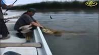 Chuyện lạ có thật: Cá Và Người