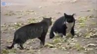 2 chú mèo đang đánh nhau thì cảnh sát chó xuất hiện