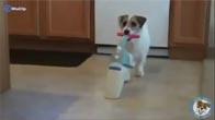 Chú chó dễ thương tự biết làm việc nhà