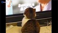 Cười té ghế với những chú mèo ngốc nghếch