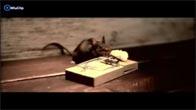 Bẫy chuột đỉnh nhất mọi thời đại