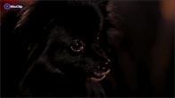 Kinh ngạc chú chó thôi miên người tại Britain's Got Talent