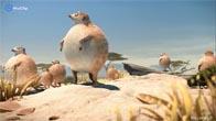 Khi thế giới trở lên béo phì :(O)