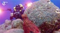 Bạch tuộc chơi trốn tìm với thợ lặn