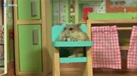 Con chuột Hamster bá đạo