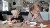 Chết cười với 2 con chó ngồi ăn như người
