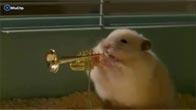 Chuột Hamster chơi nhạc