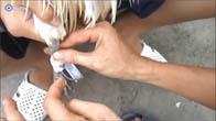 Hướng dẫn cách quấn cựa gà tre phổ biến
