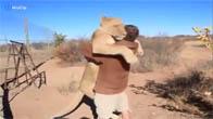 Cảm động sư tử nhảy lên ôm chủ vì quá nhớ