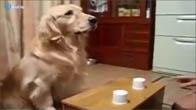 Chó khôn vãi, chú tuổi gì lừa anh