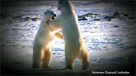Thiên nhiên hoang dã nước Nga - Vùng Bắc Cực