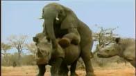 Khi động vật giao phối