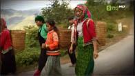 Du lịch Hà Giang - Mùa hoa Tam Giác Mạch nở rộ