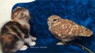 Tình bạn giữa cú nhỏ - mèo con đã trở thành hiện tượng Internet Nhật Bản