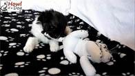 Bé chó cực dễ thương được nuôi dưỡng sau 2 tháng