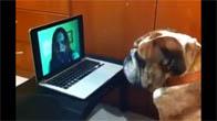 Phản ứng của chó khi bị dọa ma