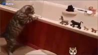 Chú mèo hạ gục chúa sơn lâm chỉ với 1 đòn =))