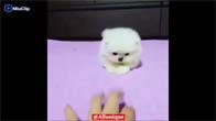 Bé chó siêu cute