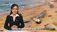 Cá chết hàng loạt khắp miền Trung