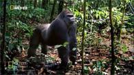 [Thuyết Minh] Cuộc Chiến Giành Ngai Vàng Của Khỉ Đột