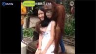 Con khỉ mất nết bóp vếu con gái ngay giữa thanh thiên bạch nhật