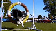 Những chú chó siêu phàm nhất thế giới