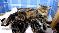 Mèo mẹ và những đứa con đáng yêu của nó