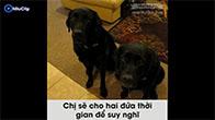 Cô chủ tra khảo hai chú chó ăn vụng bánh quy