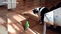 Mối quan hệ tình cảm đặc biệt giữa mèo và vẹt