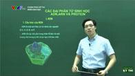 Chinh phục kỳ thi môn Sinh học - Các đại phân tử sinh học ADN, ARN và Protein
