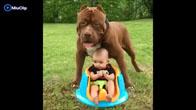 Bảo mẫu chó chăm sóc em bé