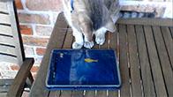 Chú mèo chơi game bắt cá