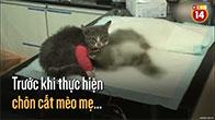 Câu chuyện về tình mẫu tử thiêng liêng của chú mèo con dành cho mẹ