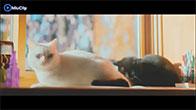 [Phim Ngắn] Ngày Của Mèo - Hay và cảm động