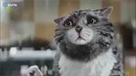 Con mèo phá hoại nhất quả đất