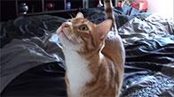 Mèo gọi mẹ thay vì kêu meo meo