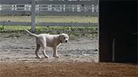 Câu chuyện cảm động về chú chó tìm đường về nhà PI
