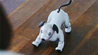 Robot chó thông minh Aibo của Nhật Bản