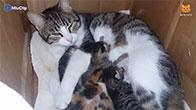 Clip mèo mẹ và những đứa con cực đáng yêu