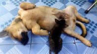 Đây là kết quả khi bạn nuôi chung chó mèo với nhau