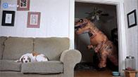 Đóng giả khủng long troll chó và cái kết