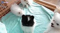 Những chú cún con siêu dễ thương