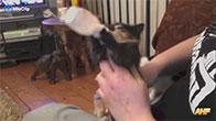 Mèo con bú bình cực dễ thương