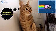 Phản ứng của mèo khi xem Nyan Cat