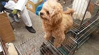 Khám phá chợ chó mèo lớn nhất Việt Nam