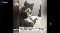 Cảm xúc của mèo khi bị chị Google hù