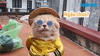 Mèo tên chó cute nhất Hải Phòng 🐱 - Quan trọng là thần thái của hoàng thượng